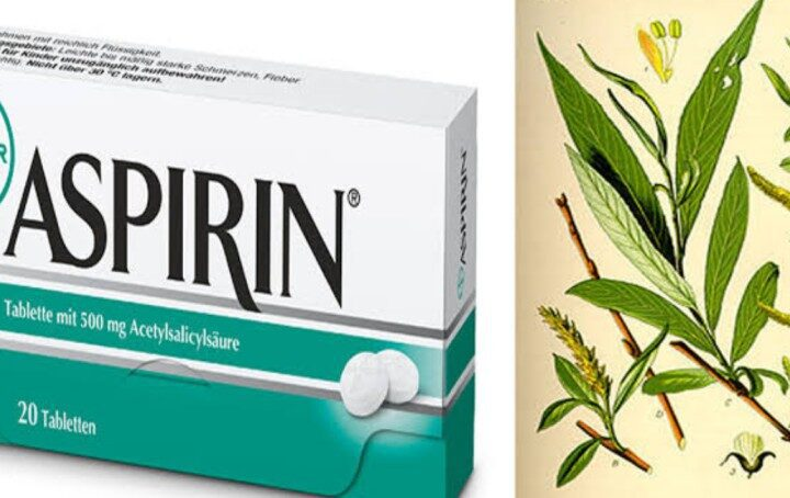 Did you know you can use willow bark for pain relief instead of Aspirin?